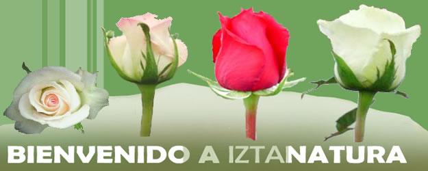 Sociedad Exportadora de San Juan Tetla S.A. de C.V.