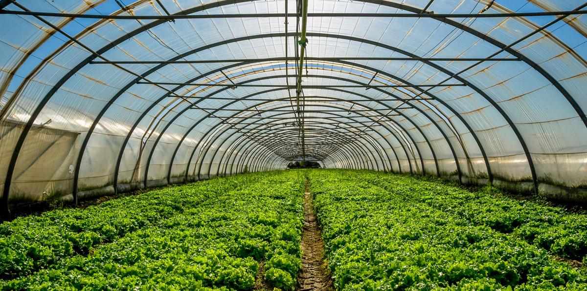 Cient ficos de la unam trabajan en la construcci n de for Construccion de viveros e invernaderos
