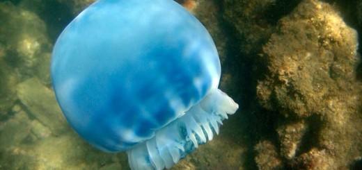 22-07-16-medusa